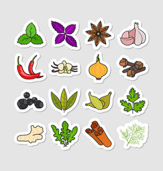 herbs and spices stickers vector image
