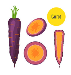purple carrot healthy garden nutrition organic vector image