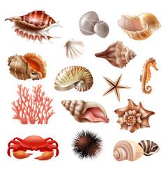 seashell realistic set vector image