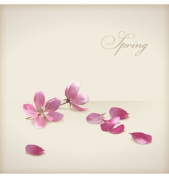 Floral cherry blossom flowers spring design vector image vector image