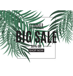 abstract summer sale background with palm leaves vector image