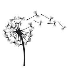 Dandelion in wind vector