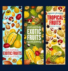 Exotic fruits organic tropic fruit harvest vector