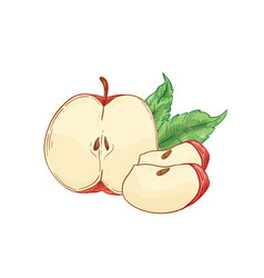 Red apple slices hand drawn vector