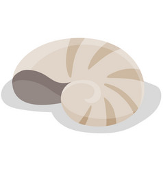 Shell isolated on white background chitin vector
