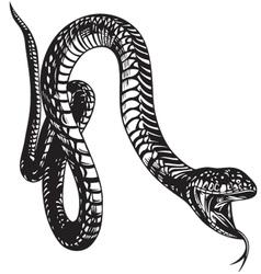Big Snake vector image vector image
