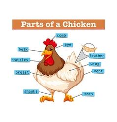 Diagram showing parts of chicken vector image