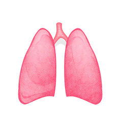Healthy human lungs vector