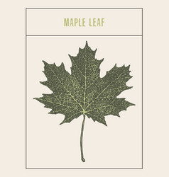 high detailed maple leaf drawn sketch vector image