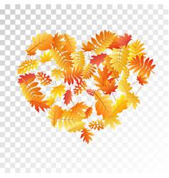 Oak maple wild ash rowan leaves vector