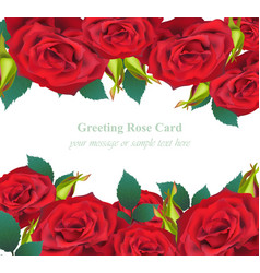 Red roses flower invitation card delicate vector
