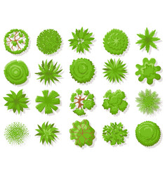 top view plants tropical trees green plant tree vector image