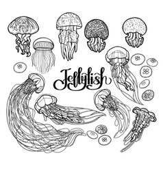 Jellyfish in line art style vector image