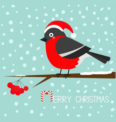 bullfinch winter red feather bird sitting on vector image