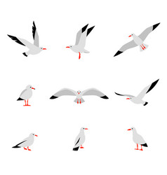 Seabirds set of beautiful seagulls in a flat vector
