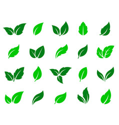 Set of green leaves icons vector