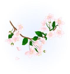 Branch wild Cherry natural background illus vector