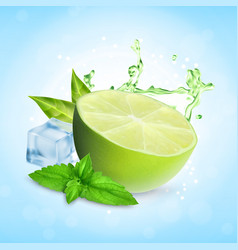 fresh lime with mint vector image
