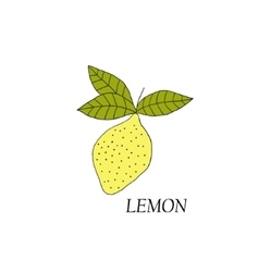 Hand drawn of yellow lemon vector