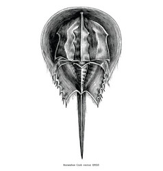 Horseshoe crab vintage clip art vector