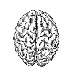 human brain top view hand drawn sketchy vector image
