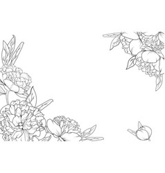 peony rose garden flowers corner border frame vector image vector image