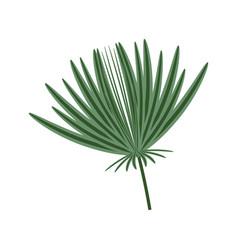 isolated plant leaves vector image vector image