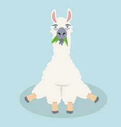 cute alpaca sitting happy vertor vector image