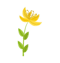 Drawing yellow lily flower natural vector