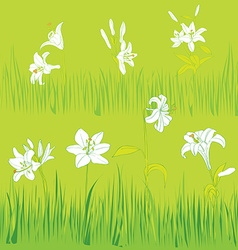 lilies garden vector image