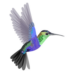 tropical bird hummingbird in blue-green tones vector image