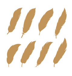 bird feathers set collection vector image