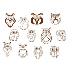 Cute cartoon owl characters vector image vector image