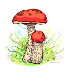 Red-cap bolete mushroom vector