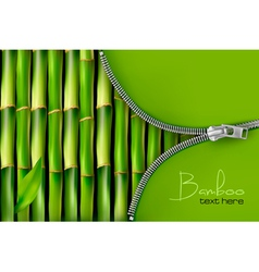 Bamboo background with open zipper vector image vector image