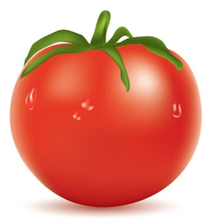 tomato with water drops vector image vector image