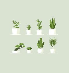 houseplant in pots vector image