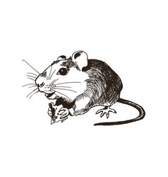 cute fluffy rodent animal holding slab cheese vector image