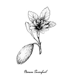 Hand drawn of banana passionfruit on white backgro vector