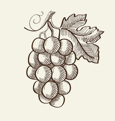 Hand drawn organic bio fruit concept vector