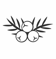 Juniper berry icon vector