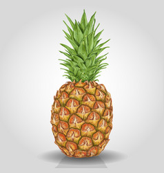 pineapple fruit abstract food vector image