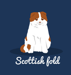 scottish foldcute cat on blue background vector image vector image