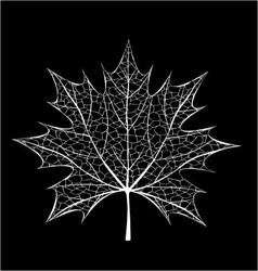 White leaf vector image