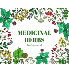 Wild medicinal herbs background vector image vector image