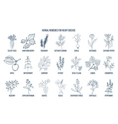 collection of best herbs for heart disease vector image