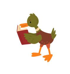 cute male mallard duck reading book funny vector image