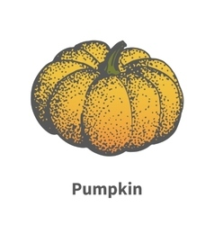 Hand-drawn ripe yellow pumpkin vector