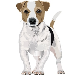 Jack Russell Terrier new version vector image