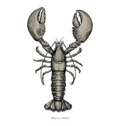 lobster hand drawing vintage engraving vector image